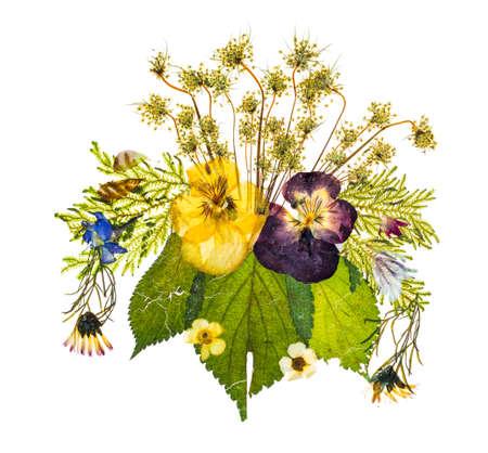 fiori secchi: Bella disposizione artistica di fiori secchi pressati illuminata da dietro per dare trasparenza e isolato su uno sfondo bianco