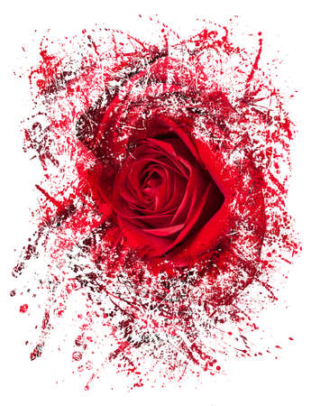 anniversary flower: Detailed close shot of velvet red rose breaking into many pieces to suggest either a breakup or perhaps excitement as the rose devolves into abstract illustration
