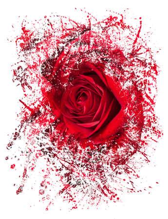 Gedetailleerde close shot van fluweel rode roos breken in vele stukken om ofwel een breuk of misschien opwinding voorstellen als een roos delegeert in abstracte illustratie