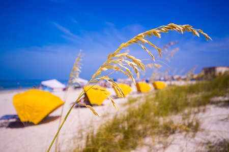 sea oats: Sea Oats frame the sand on Madiera Beach with yellow sun shades in Florida on Gulf of Mexico