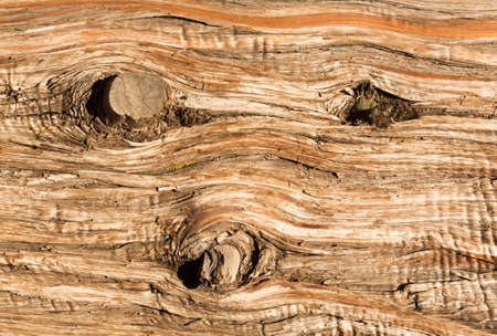 cedar: Three stumps of knots of old branches in detailed background abstract image of the aging bark of a dead cedar tree in macro close up Stock Photo