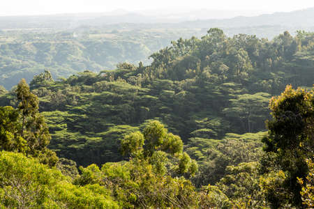 over hill: View over hill ranges and forests from Okolehao Trail near Hanalei, Kauai, Hawaii