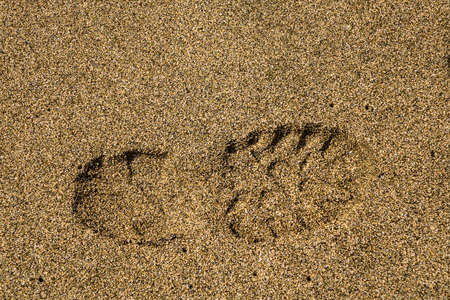 boot print: Close up of a single boot or shoe print of a right foot with grip set deeply into sand