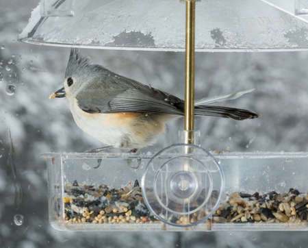 bird feeder: Tufted Titmouse bird in window attached birdfeeder on a wet cold day in winter