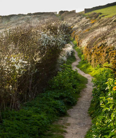 south west coast path: South West Coast Path along headland near Port Quin, Cornwall, England, UK Stock Photo