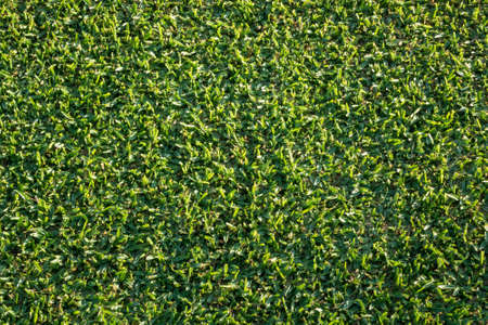 top down: Aerial or top down view of the detail of newly mown grass in well tended lawn