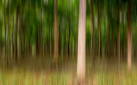 blurred motion: Artistic blurred motion image of plantation of Mahogany trees in Kauai, Hawaii, USA Stock Photo