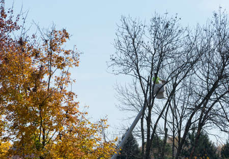 picker: Tree surgeon using chain saw to cut branches from large tree using a cherry picker mechanical lift or machine
