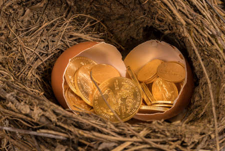 Selection of pure gold USA treasury coins in broken egg shells in twig bird nest illustrating financial security of a retirement nest egg Imagens