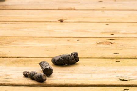 Dog poop left on the wooden boards of an outside deck or patio Stock Photo