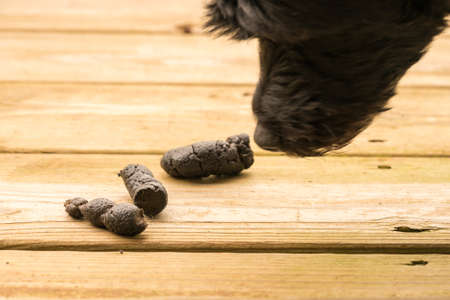 excrement: Dog poop left on the wooden boards of an outside deck or patio Stock Photo