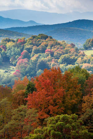 shadowed: Red autumn fall leaves in West Virginia with shadowed hillside in distance