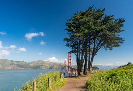 Marin Headlands with the Golden Gate Bridge taken with Cypress trees from Golden Gate park in San Francisco on clear spring day