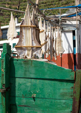Cod Fish or Cat Fish drying on boat at Camara de Lobos on island of Madiera