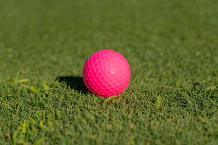 Pink colored golf ball on the edge of the putting green as concept for women golfers