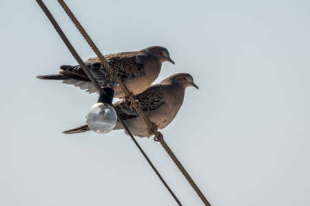 Two small birds sitting on the lighting wires at the front of an ocean going cruise ship