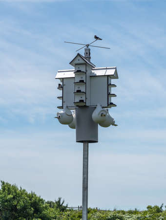 Multiple bird houses in one wooden structure in state park in New Jersey Stock fotó