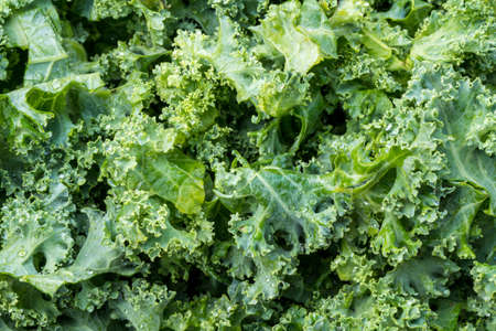Macro photo of kale leaves freshly washed and trimmed of their stems ready for cooking