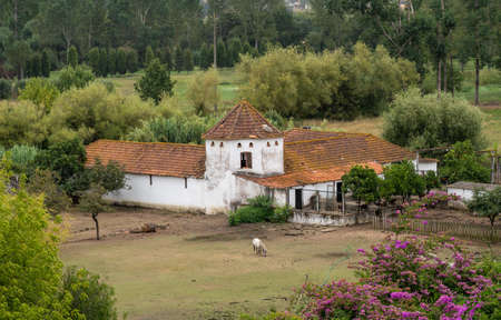 Red tiled roof on whitewashed Portuguese riding stables with horse nibbling the grass