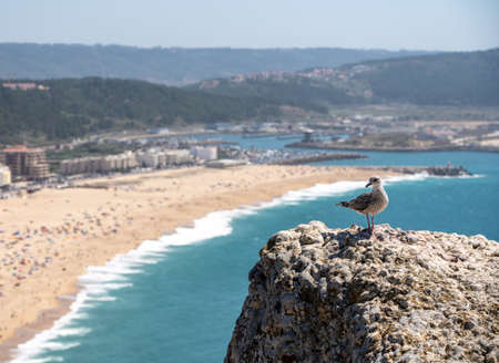 Single seagull on rocky ledge above the crowded beach of Nazare with tourists relaxing on the sand