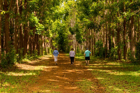 Senior adults walking on the Wai Koa Loop trail or track leads through plantation of Mahogany trees in Kauai, Hawaii, USA Stock Photo
