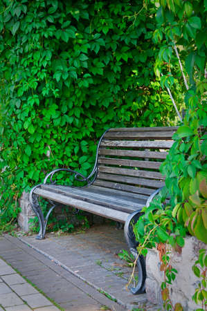 an empty bench in the park photo