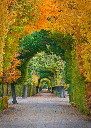 Lange Straße in der Herbst-Park Standard-Bild - 21763199