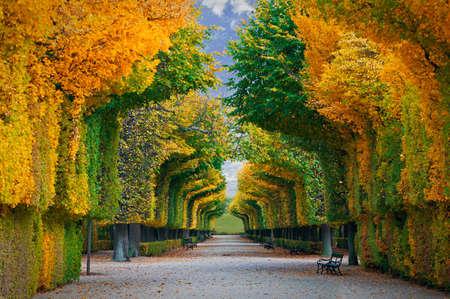 landschaft: lange Straße in der Herbst-Park