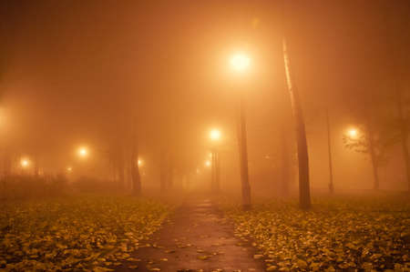 Autumn Park at night in the fog photo
