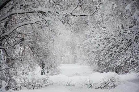 雪の中で長い道のり 写真素材