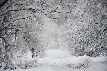 Langen Weg in den Schnee Standard-Bild - 21766020
