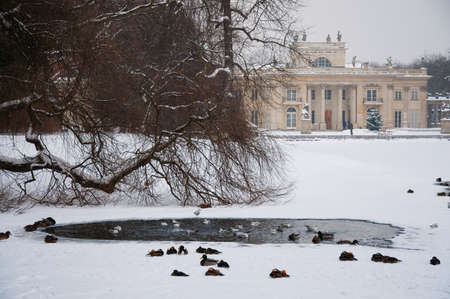 Lazienki Park in winter. Poland, Warsaw. photo