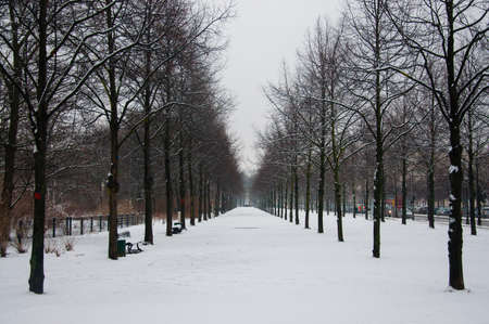 Tiergarten winter park in Berlin photo