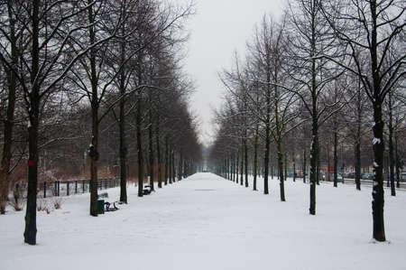 central europe: Tiergarten winter park in Berlin Stock Photo
