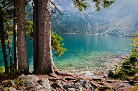 nature landscape: pines on the shore of a mountain lake