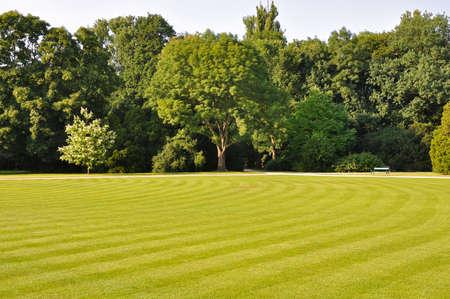 lazienki: green field in Lazienki Park