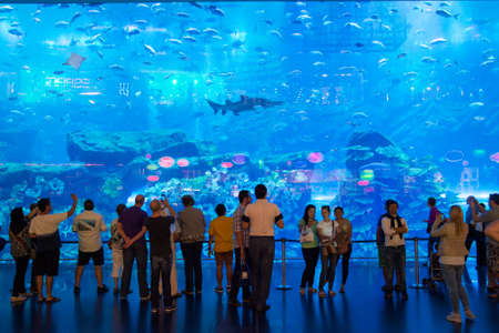 DUBAI, UAE - MARCH 3: View of the aquarium at Dubai Mall in Dubai, on March 3, 2014. It is the largest indoor aquarium in the world at a length of 50 meters.