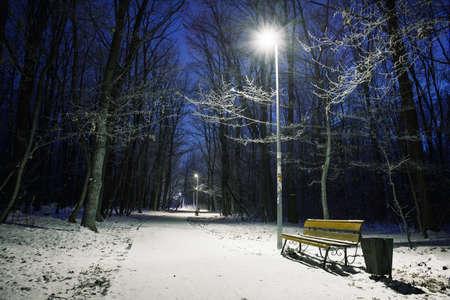 snowlandscape: Bench in night winter park