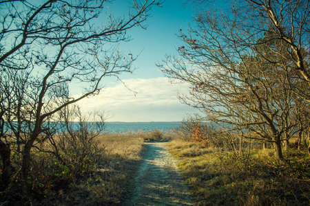 non urban: dirt road in the forest by the sea