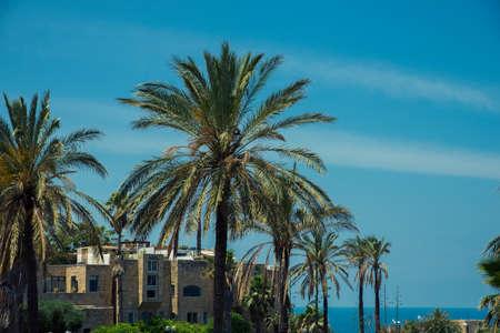 jafo: Park in the old city of Jaffa in Tel Aviv