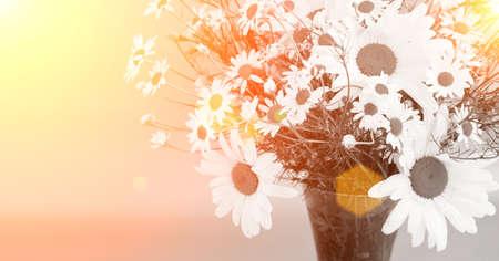 Beautiful white flowers Banco de Imagens