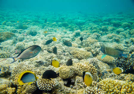 coral reef of the red sea Banque d'images