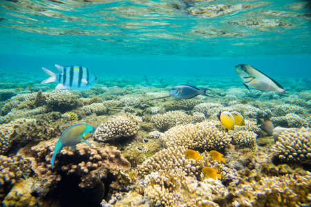 coral reef of the red sea Stock Photo