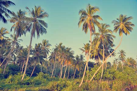 wild jungle in Sri Lanka Imagens