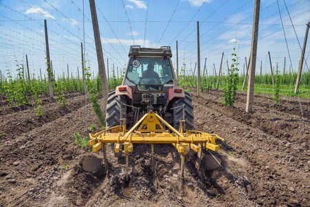 The tractor processes the hops field Imagens
