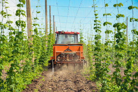 The tractor processes the hops field 免版税图像