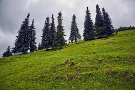 beautiful forest landscape in the mountains