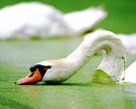 Natural And Beautiful Bird Image