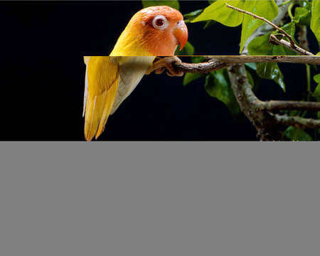 Natural And Beautiful Bird Image Stock Photo