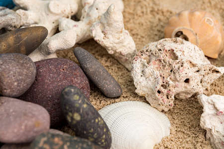 sea snails in sand next to other elements and starfish